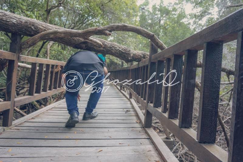 Hutan Mangrove Sukadana Kayong Utara