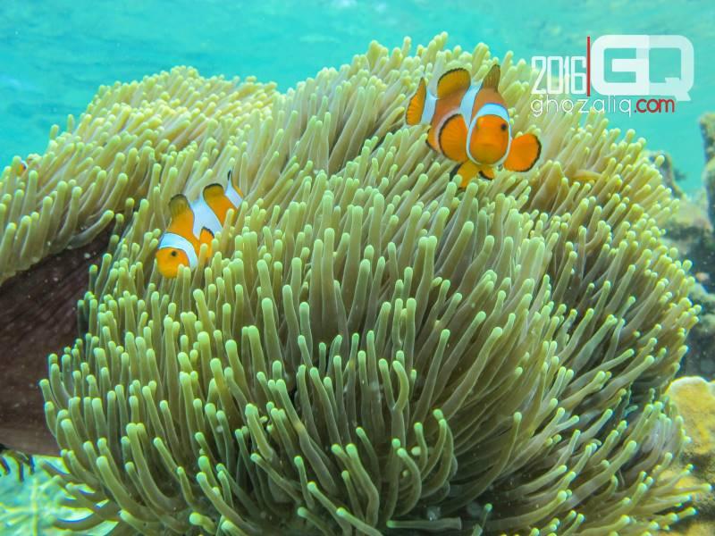 Backpacket karimunjawa wisata bahari snorkeling